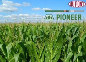 DuPont-Pioneer